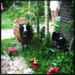 Blog Jamie magazine: op de boerderij