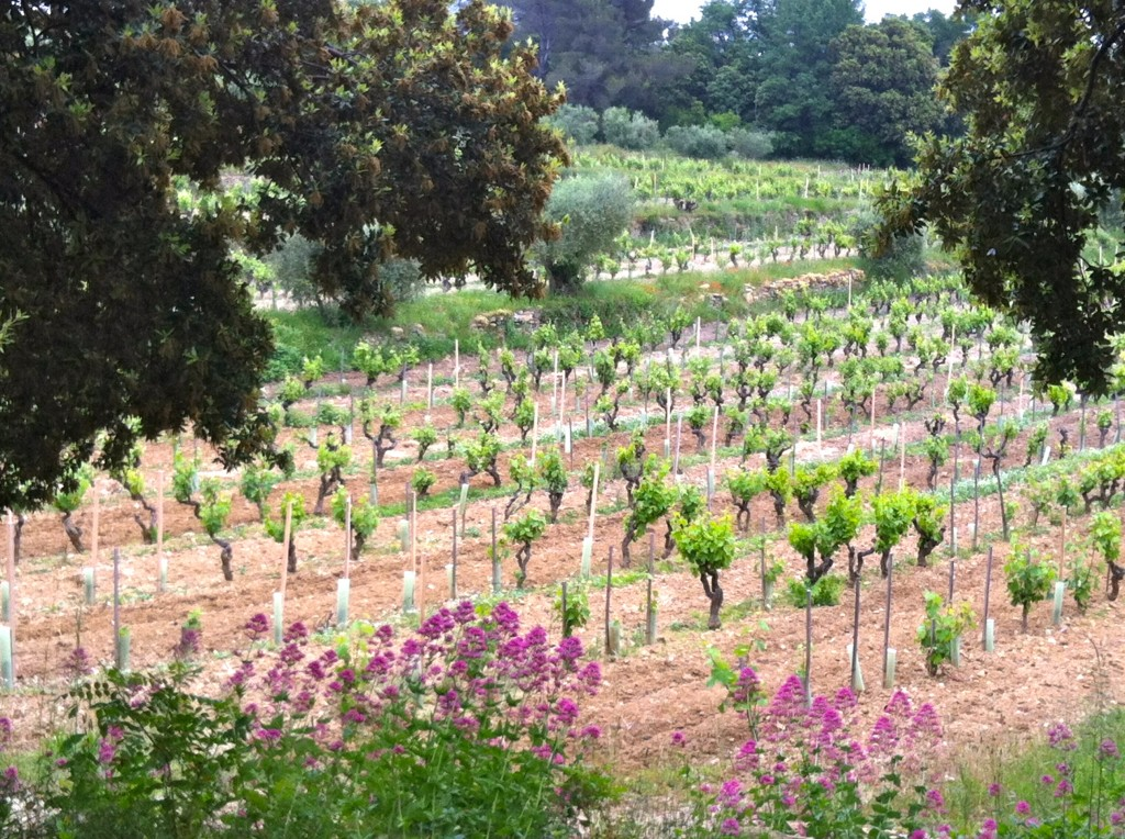 De wijnranken Madebyellen