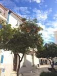 Lagos en de markt – Algarve Portugal