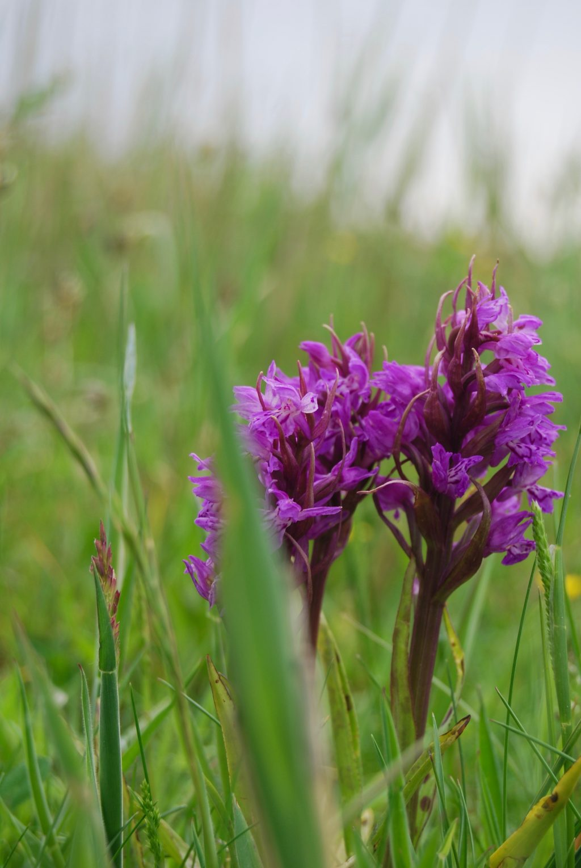 flora en fauna schiermonnikoog made by ellen