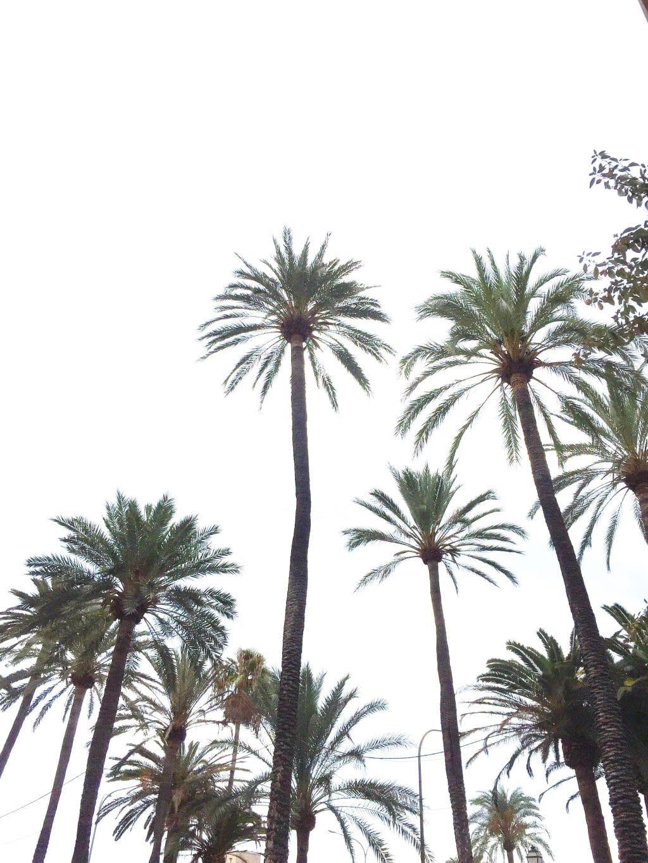 15x hotspots Palma de Mallorca