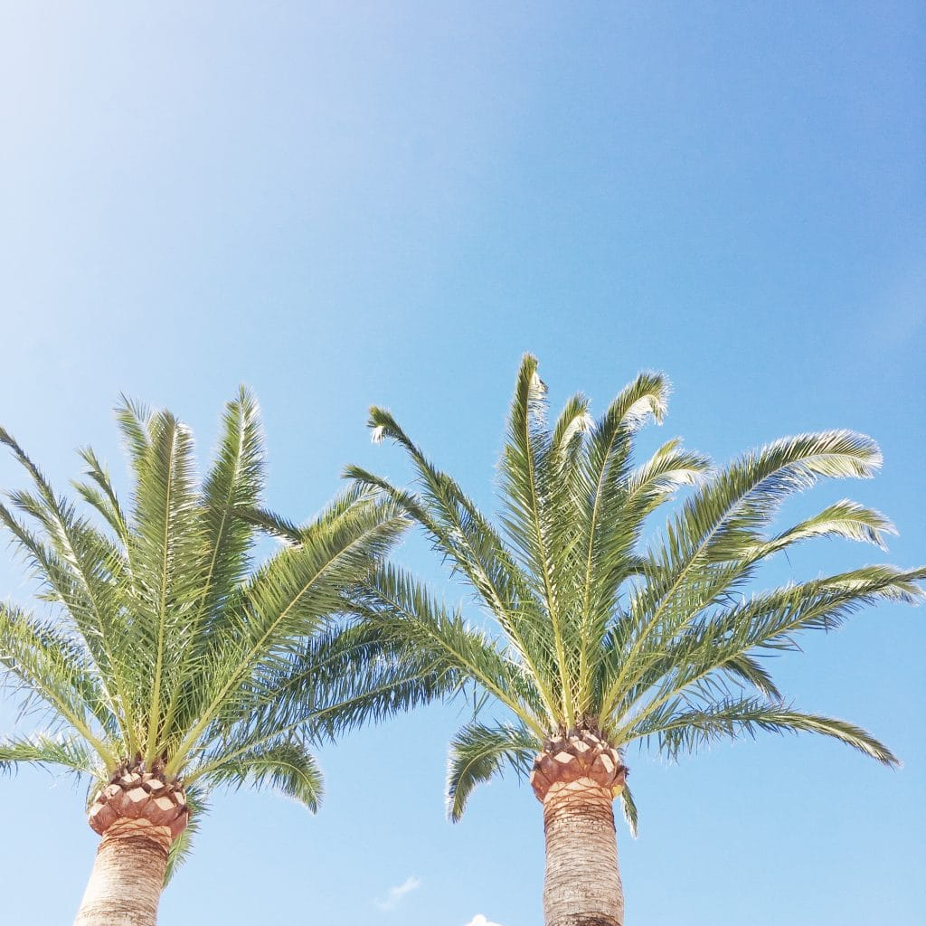 Alcudia & Pollensa Mallorca vakantie - restaurants & hotspot made by ellen