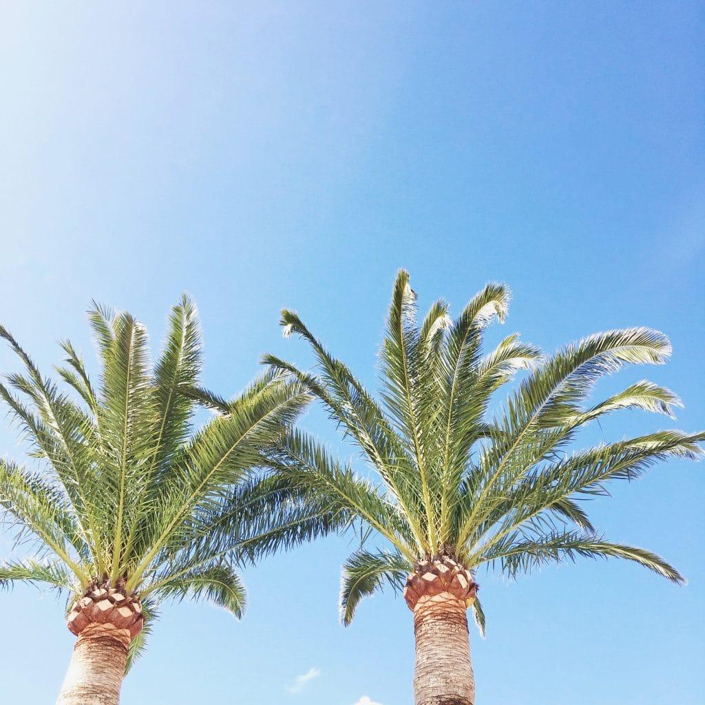 Pollenca Mallorca vakantie tips! Koffie, ijs & restaurants