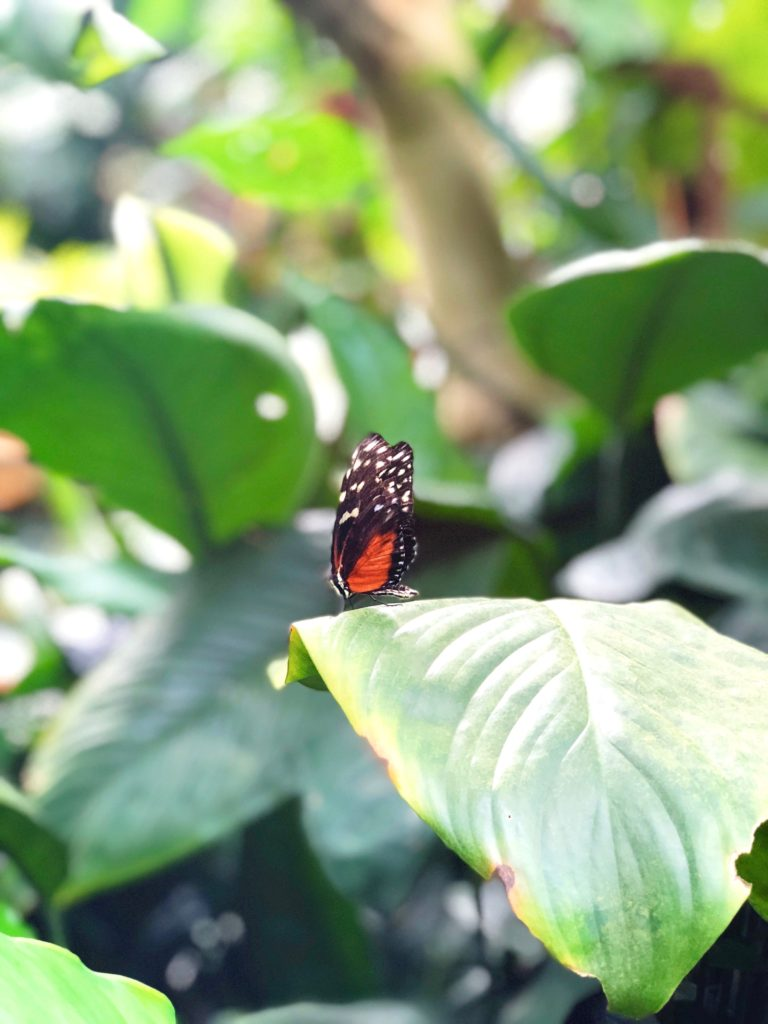 vlindertuin Mainau eiland made by ellen