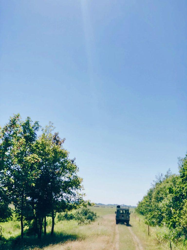 Safari land rover lauwersoog groningen made by ellen