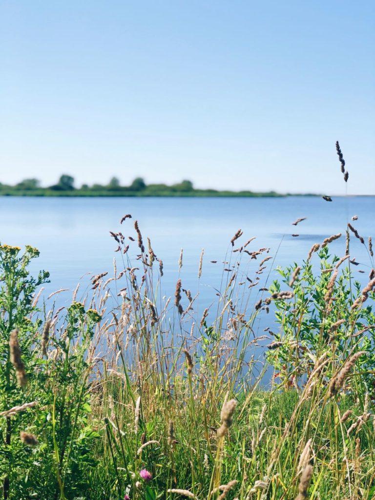 de natuur in lauwersmeer groningen