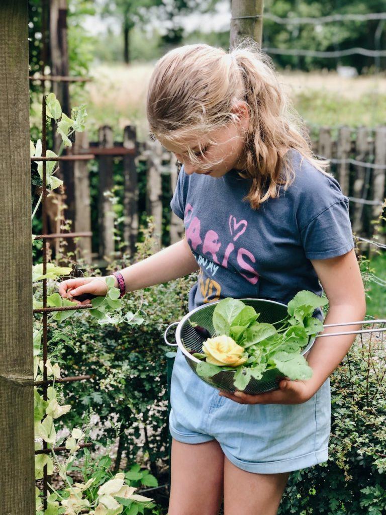 Groente oogsten voor de moestuinsalade